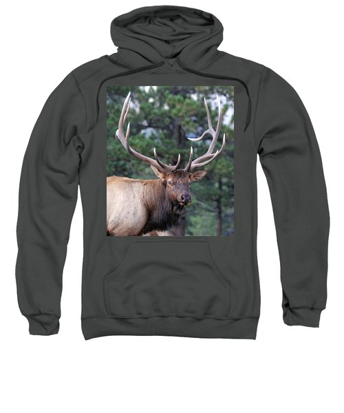Stare Down Sweatshirt