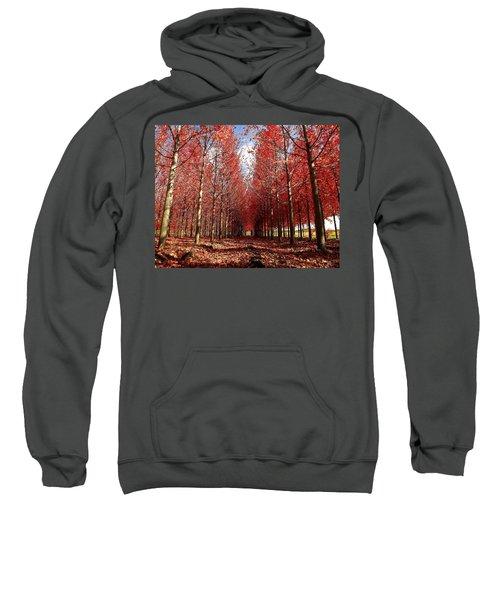 Stay Sweatshirt