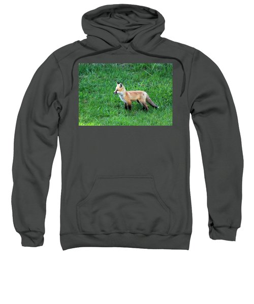 Still A Pup Sweatshirt