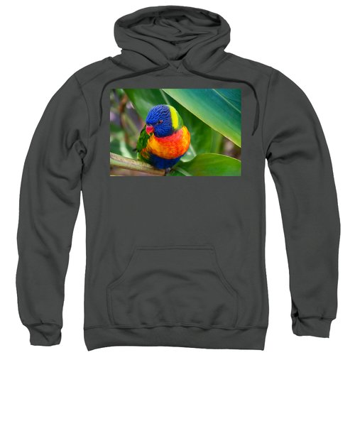 Striking Rainbow Lorakeet Sweatshirt