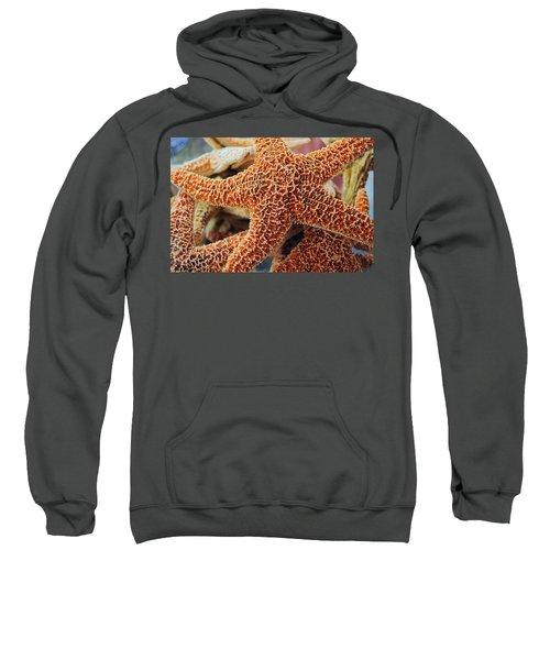 Study Of A Starfish Sweatshirt