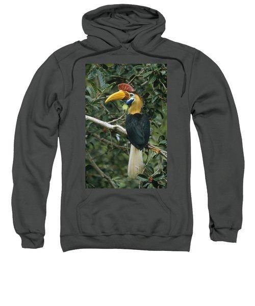 Sulawesi Red-knobbed Hornbill Male Sweatshirt by Mark Jones