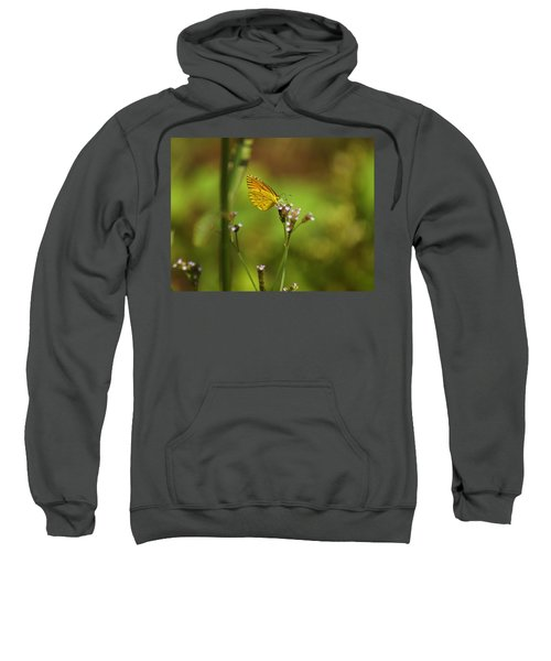 Sweatshirt featuring the photograph Sulphurs Butterfly by Kim Pate