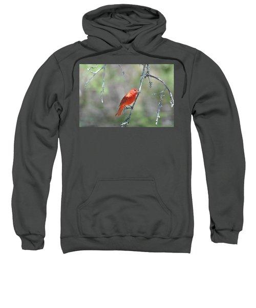 Summer Tanager Sweatshirt