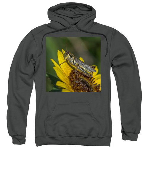 Sunflower Love Sweatshirt