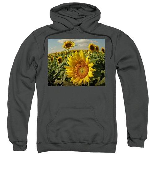 Kansas Sunflowers Sweatshirt