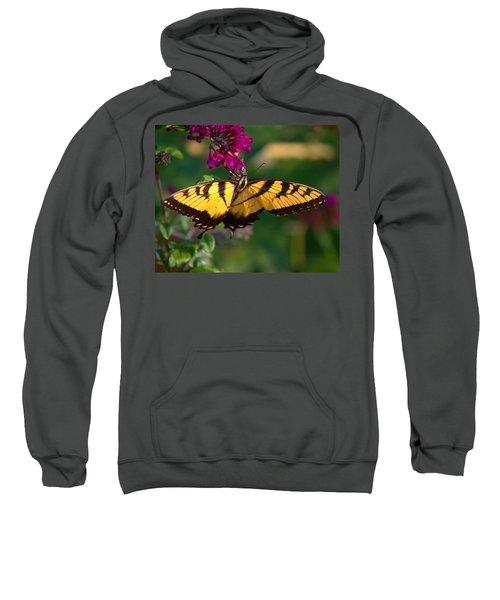 Swallowtail 1 Sweatshirt