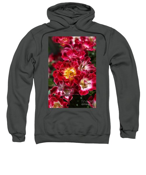 The Beauty Of Carpet Roses  Sweatshirt