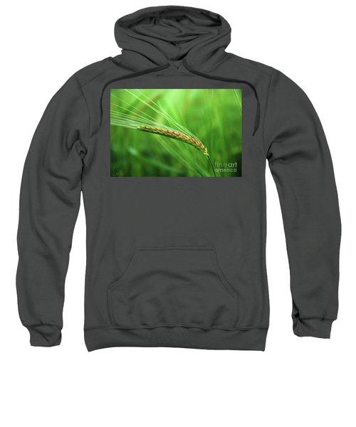 The Corn Sweatshirt