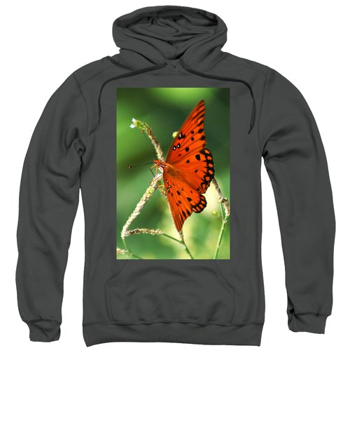 The Passion Butterfly Sweatshirt