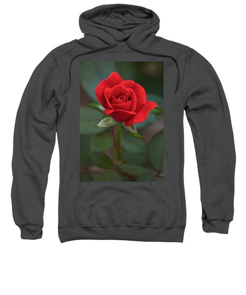 The Perfect Rose Sweatshirt
