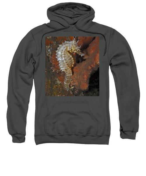 The White Seahorse Sweatshirt