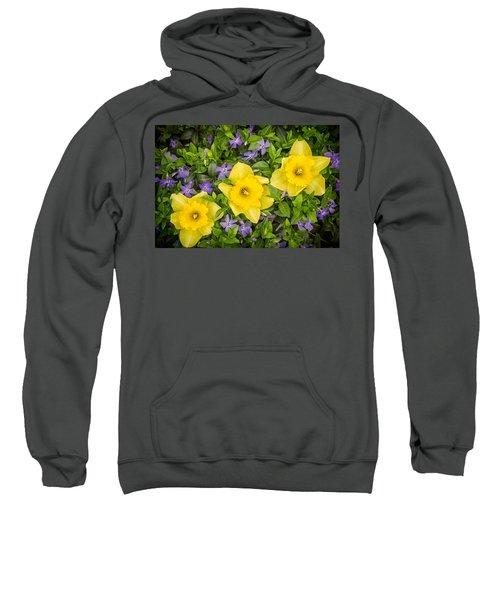 Three Daffodils In Blooming Periwinkle Sweatshirt