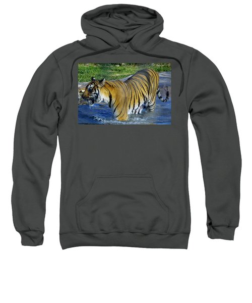 Tiger 4 Sweatshirt