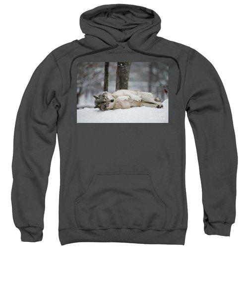 Timber Wolf In Winter Sweatshirt