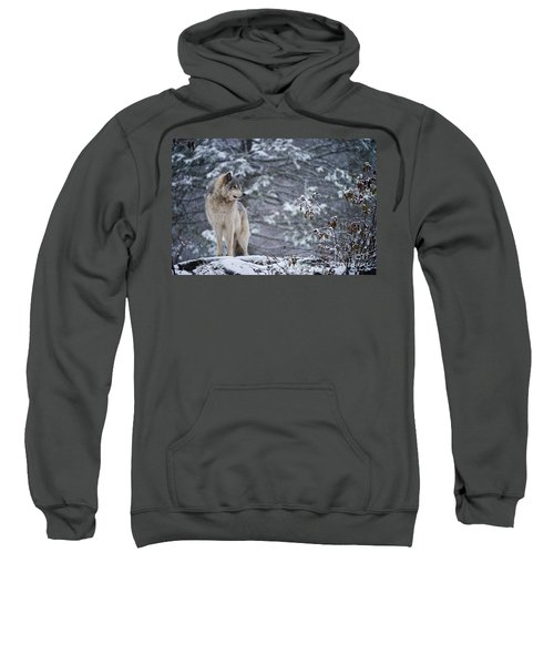 Timber Wolf Pictures 189 Sweatshirt