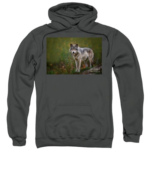 Timber Wolf Pictures 401 Sweatshirt