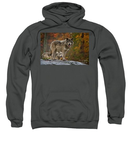 Timber Wolf Pictures 410 Sweatshirt