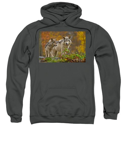 Timber Wolf Pictures 411 Sweatshirt