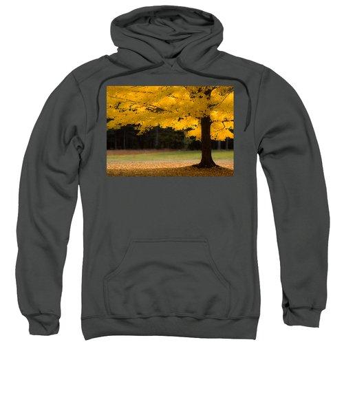 Tree Canopy Glowing In The Morning Sun Sweatshirt
