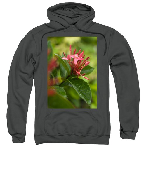 Tropical Flowers In Singapore Sweatshirt