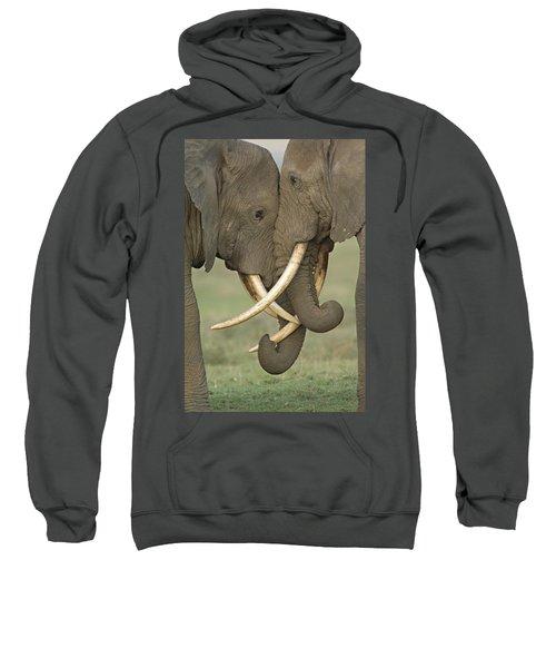 Two African Elephants Fighting Sweatshirt