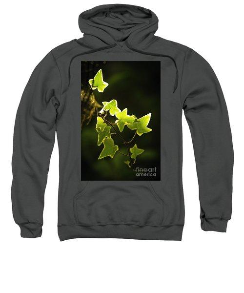 Variegated Vine Sweatshirt