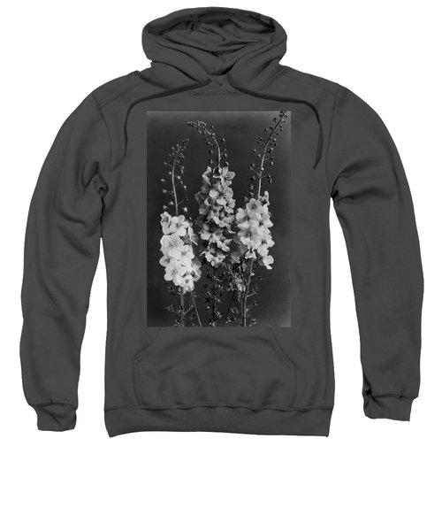 Verbascum Phoeniceum Flowers Sweatshirt