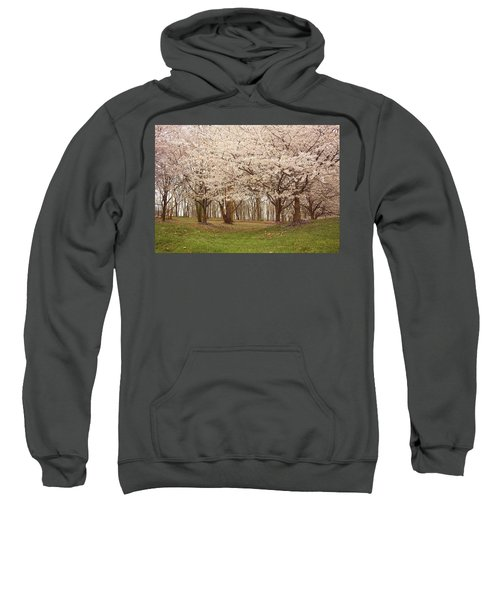 Washington Dc Cherry Blossoms Sweatshirt