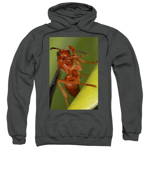 Wasp 3 Sweatshirt