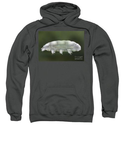 Water Bear Tardigrada - Waterbear Tardigrade  - Scientific Illustration Sweatshirt