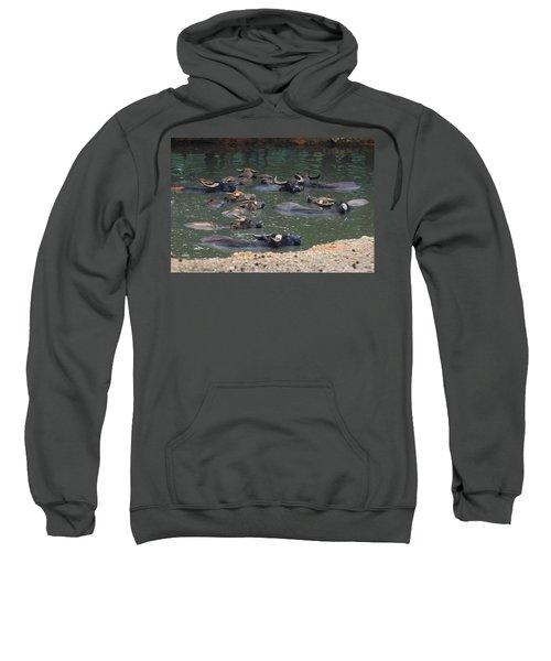 Water Buffalo Sweatshirt
