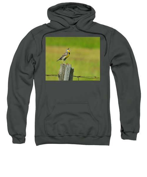 Western Meadowlark Sweatshirt by Tony Beck