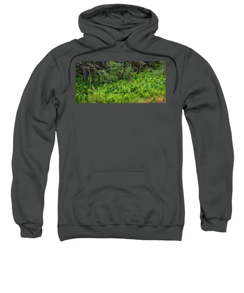 Western Skunk Cabbages Lysichiton Sweatshirt
