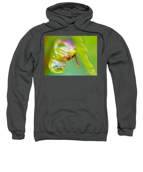 Wet Grape Leaf  Sweatshirt