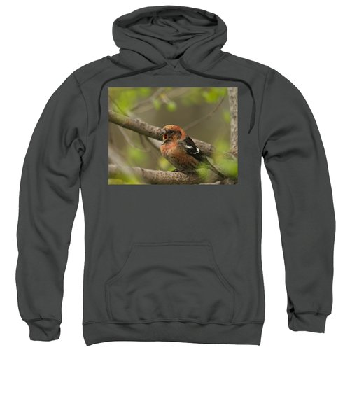White-winged Crossbill Sweatshirt by James Peterson