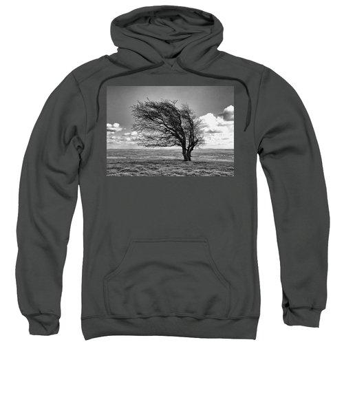 Windswept Tree On Knapp Hill Sweatshirt