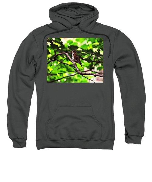 Wood Thrush Singing Sweatshirt