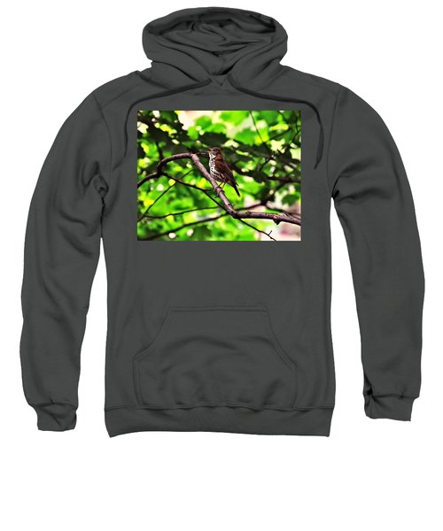 Wood Thrush Singing Sweatshirt