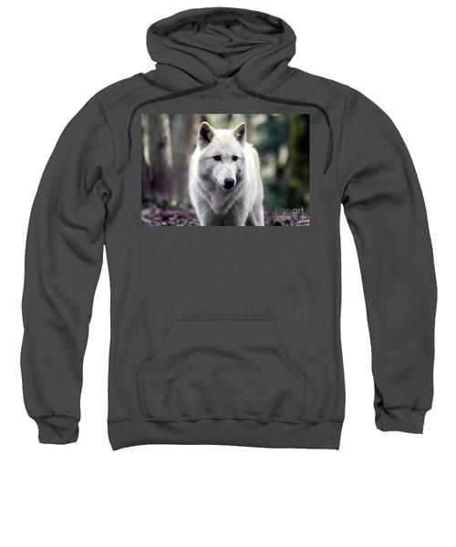 Woodland White Wolf Sweatshirt
