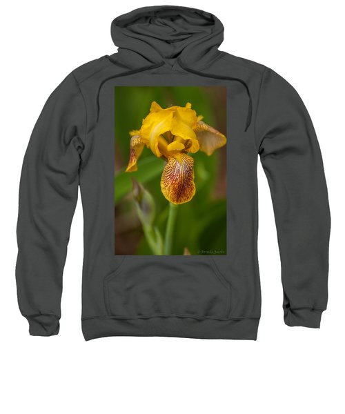 Yellow Bearded Iris Sweatshirt
