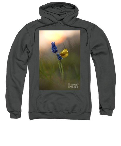 Yellow Butterfly On Grape Hyacinths Sweatshirt