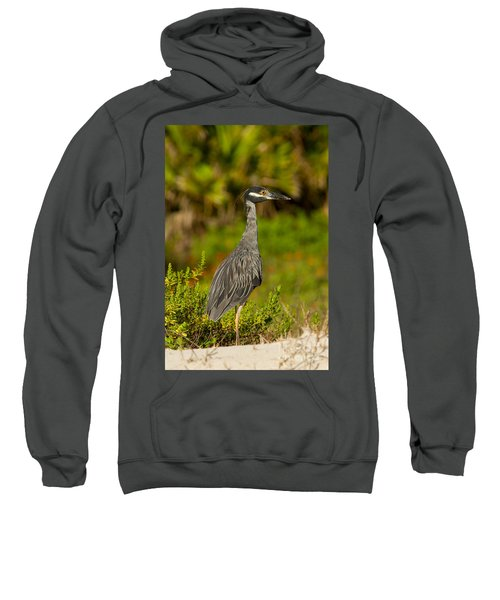 Yellow Crowned Night Heron Dune Watch Sweatshirt