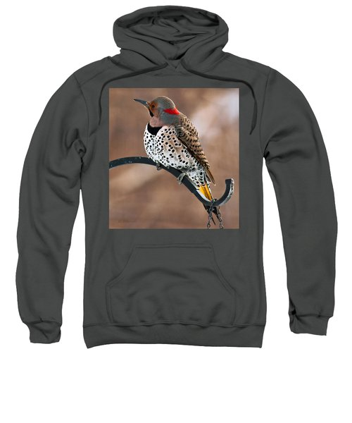 Yellow-shafted Northern Flicker Sweatshirt