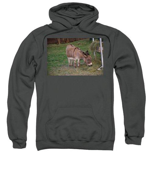 Young Donkey Eating Sweatshirt