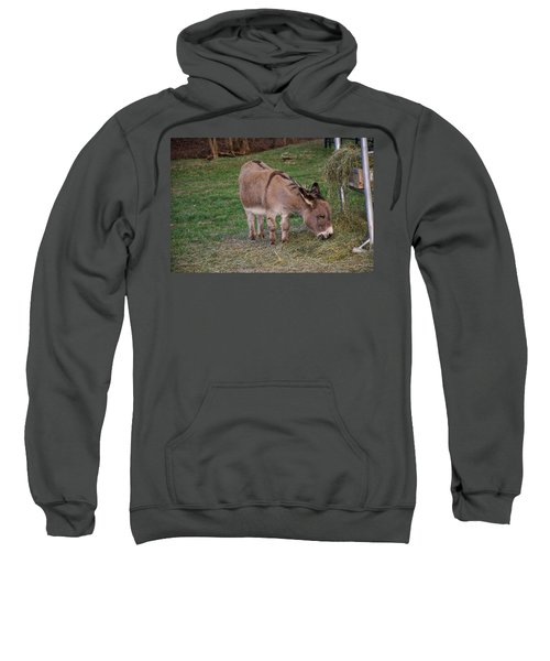 Young Donkey Eating Sweatshirt