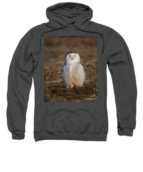 Young Snowy Owl Sweatshirt