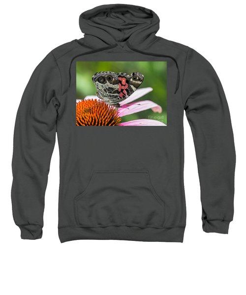 Butterfly Feeding Sweatshirt