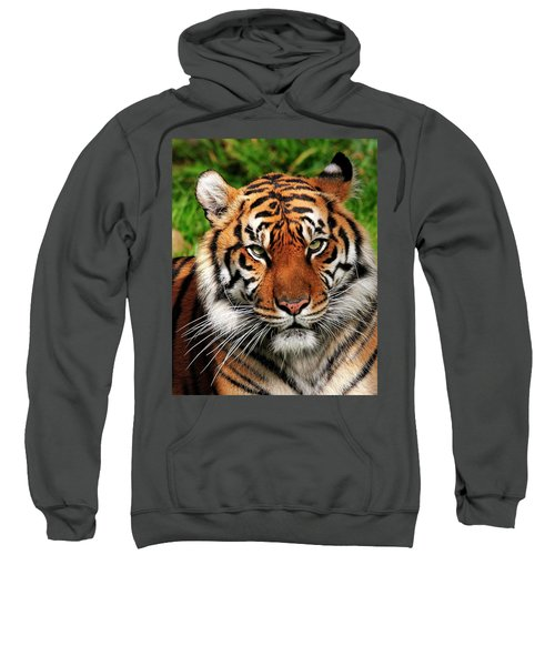 Sumatran Tiger Portrait Sweatshirt