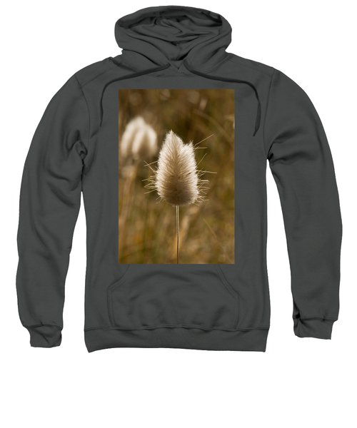 A Beautiful Seed Pod With Beautiful Sun Reflection Sweatshirt